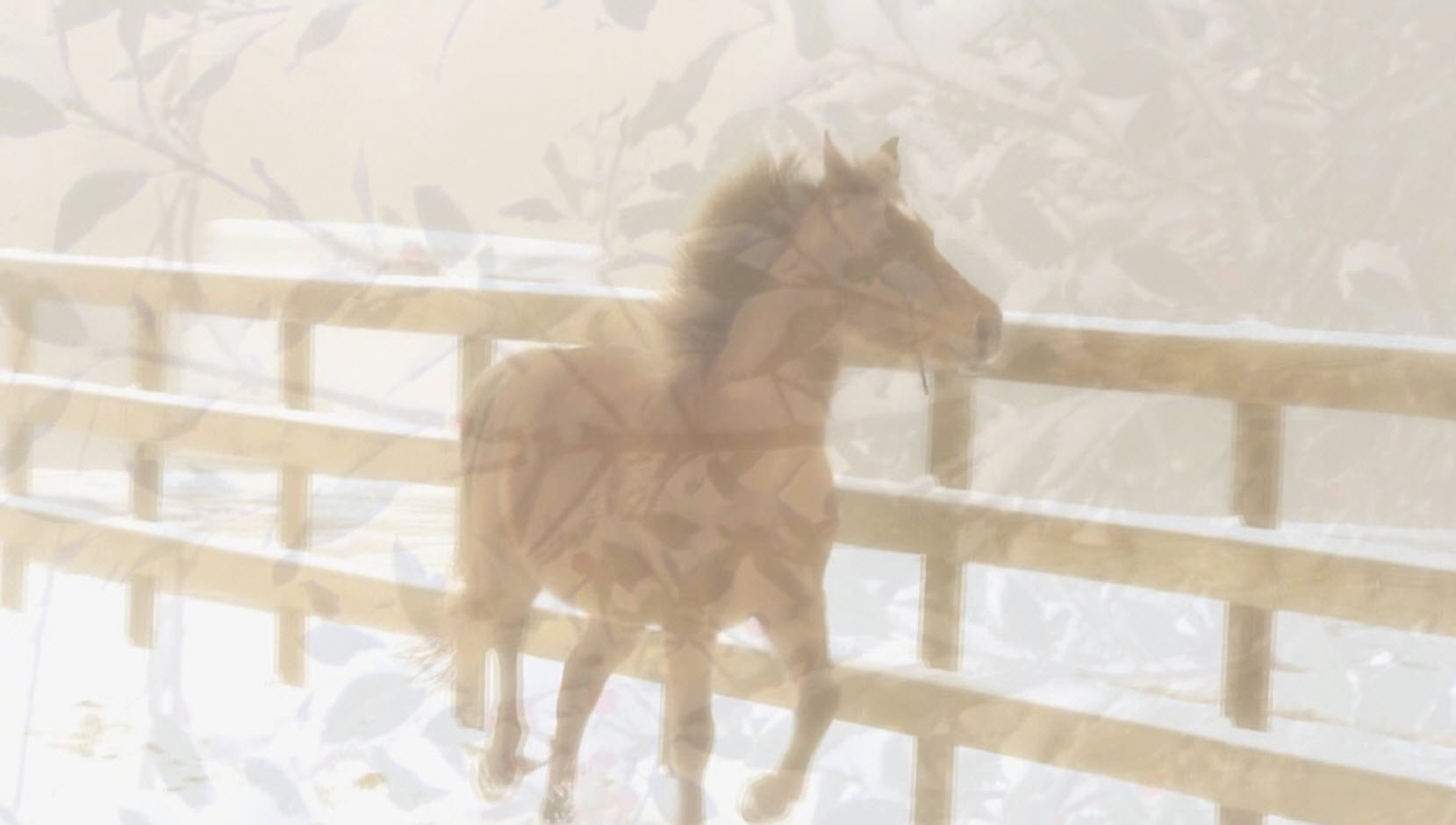 video screenshot - pony playing in snowy arena