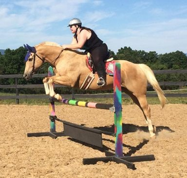 rider jumping horse over intermediate fence in arena