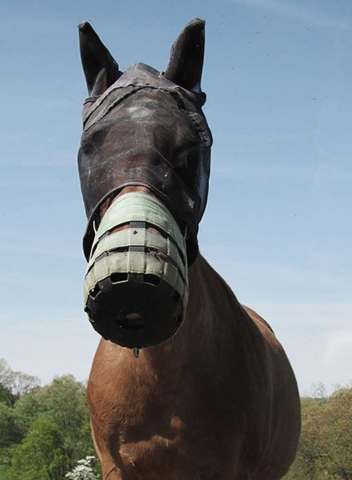 horse with grazing muzzle and fly mask
