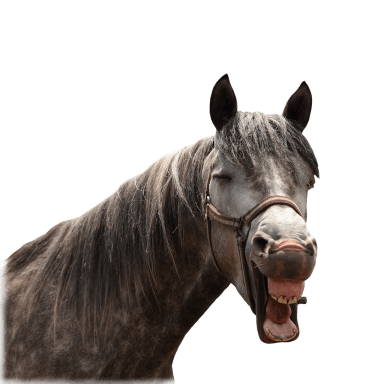 Best horse laugh ever?