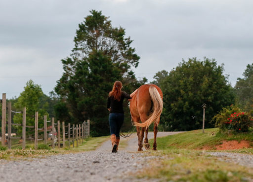 horse and girl walking together