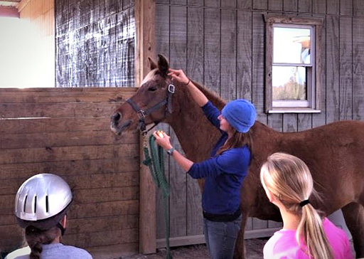 students learn halter fitting during horsey school session