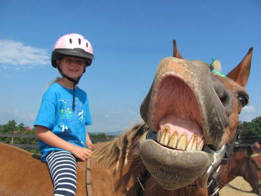 happy pony making a new friend