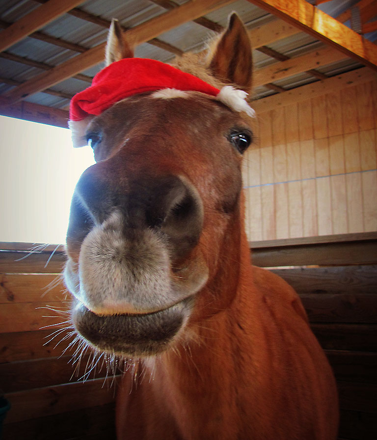 Smiling Xmas pony with sideways santa hat