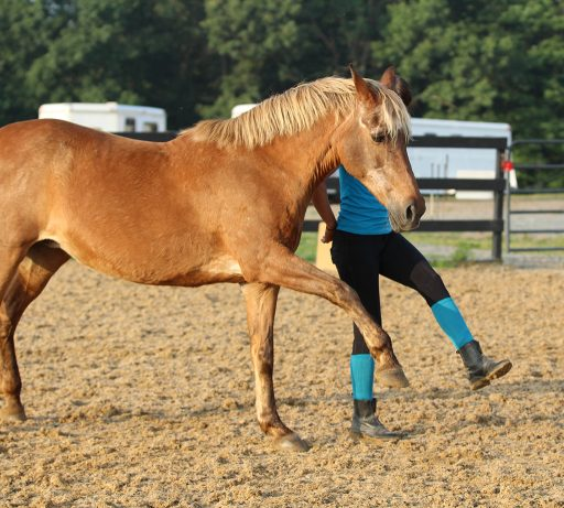 trick training - horse steps in time with trainer