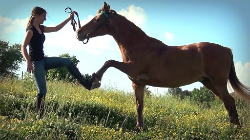 trick-trained pony gives trainer high-five in pasture