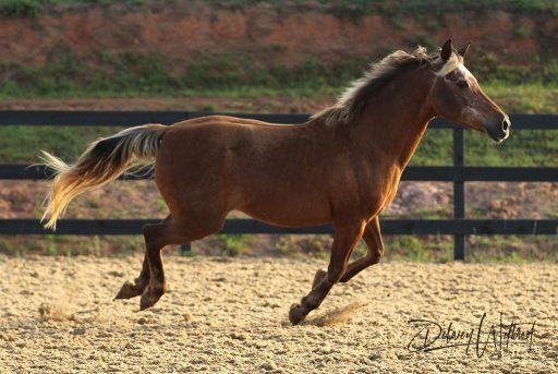 Pony loves to zoom!